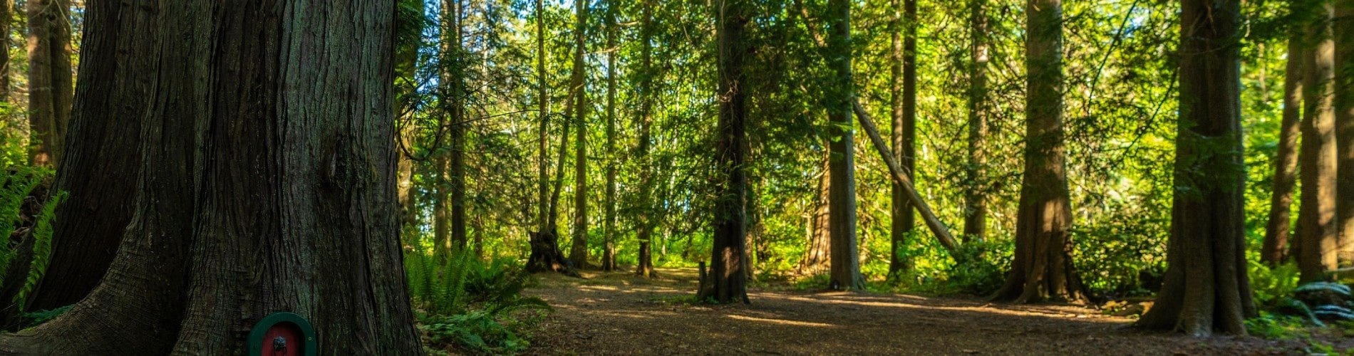 wooded area in nanaimo, bc